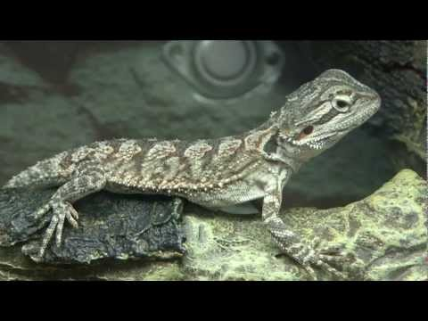 Selecting a reptile or amphibian as a pet