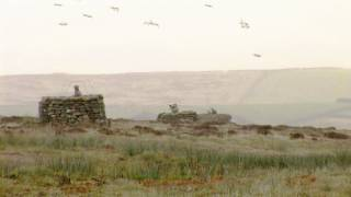 Fieldsports Britain – Grouse prospects and roebuck calling