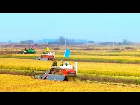 Innovation contributed to agricultural growth in China
