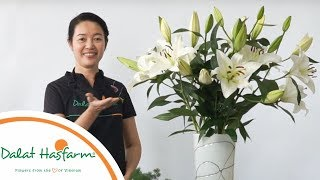 [Flowers TV] Hướng Dẫn Cắm Hoa Lily