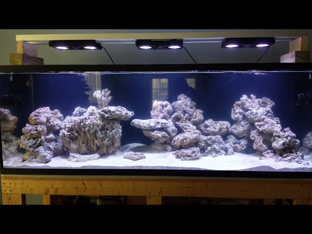180 gallon reef tank project (day 8)