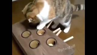 """Кот играет в """"ударь крота"""""""