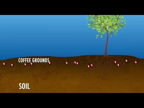 Coffee Grounds for Greener Gardens