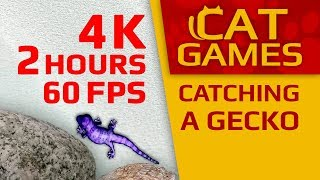 CAT GAMES - 🦎 CATCHING A GECKO (Entertainment Video For Cats) 4K 60FPS 2 HOURS