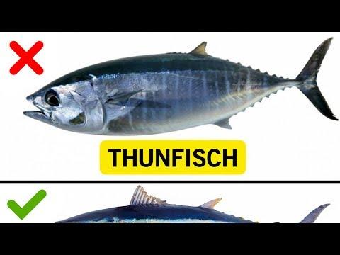 Download 10 Fische, die du nicht essen solltest!