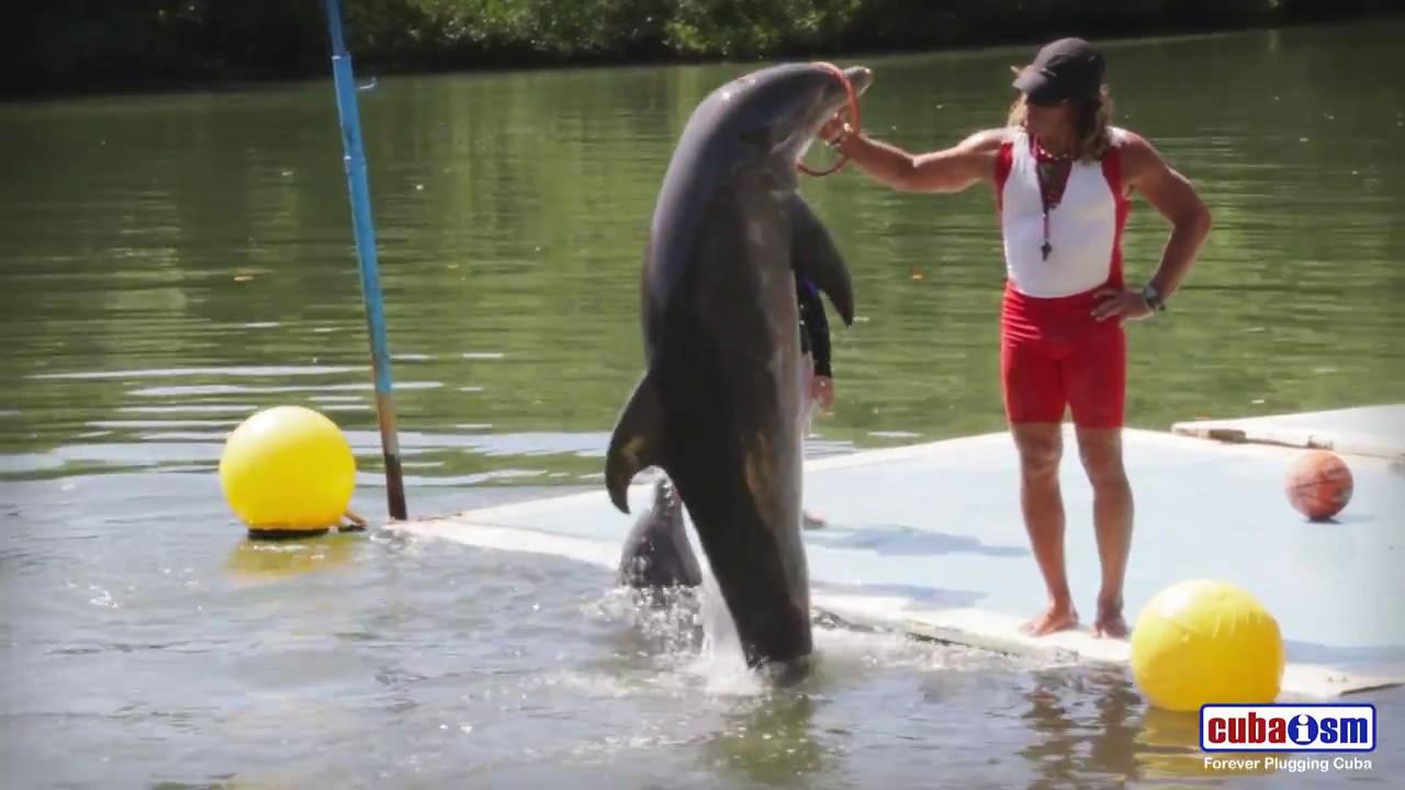 Varadero Dolphins Show - 058v01