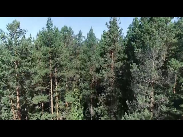 Полиция Ангарска напомнила о мерах безопасности в лесу