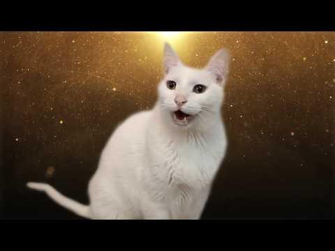 Despacito - Cats version - Versión Gatos