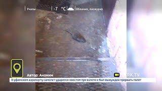 Огромную крысу сняли на видео перед входом в пекарню в Уфе