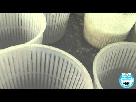 Osteocondrosi della colonna cervicale e la causa del rumore nelle orecchie