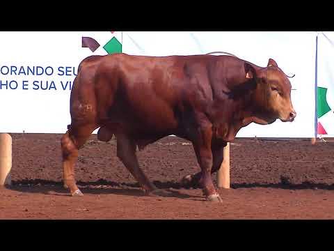 TOUROS SENEPOL- BARA 352