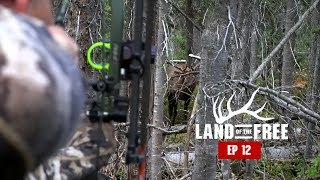 FULL DRAW on BULL ELK at 10 YARDS - EP 12 - LAND OF THE FREE 2.0