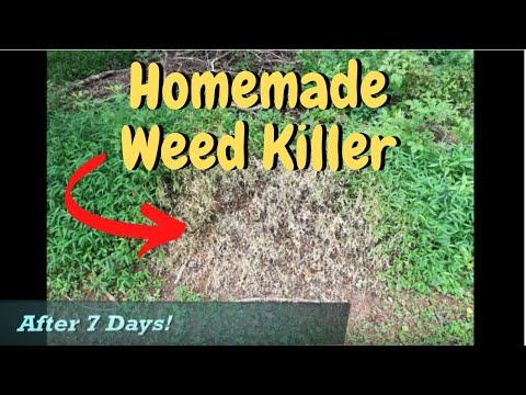 How to make ORGANIC WEED KILLER from home / with stunning results!! DIY