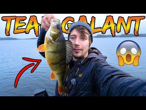 Fantastisk svensk aborrefiskeri med jig