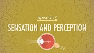 Sensation&Perception - Crash Course Psychology #5