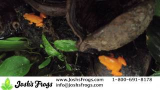 So You Want A Pet Frog?