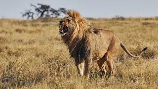 Grandes documentales - Iconos de la vida salvaje: Los depredadores de África