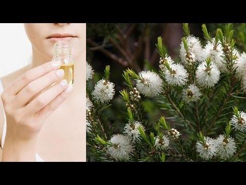 Il sito web malyshevy fungo di salute di unghie