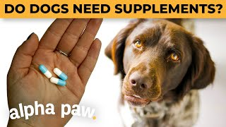Does Your Dog Need THESE Supplements?