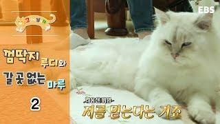 고양이를 부탁해 - 껌딱지 루디와 갈 곳 없는 마루_#002