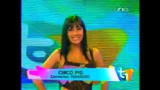Circo Pig