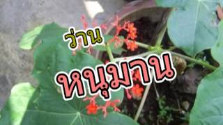 ว่านไทย 9 ชนิด