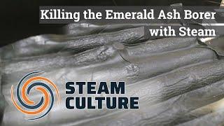 Killing the Emerald Ash Borer with Steam - Steam Culture