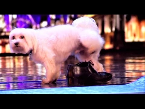MUST SEE: Doggy Yoga Session Turns Into A PEEING Mess | Auditions 1 | Britain's Got Talent 2017