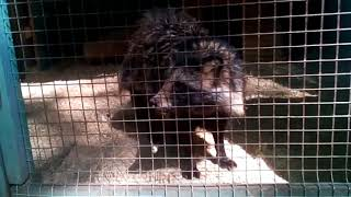 В гостях у Витебского Зоопарка