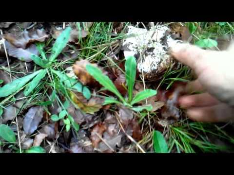 Il fungo su rimedi di gente di unghie per trattare