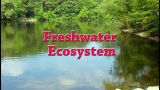 Freshwater Ecosystem | Iken Edu