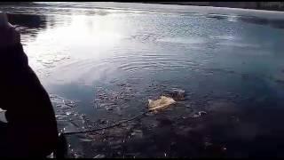Платная рыбалка в братовщине