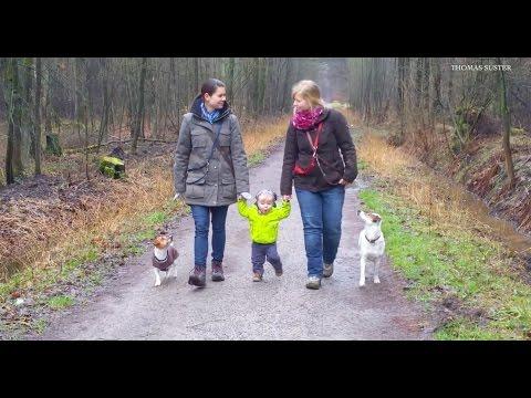 Das Video zum Sozialspaziergang mit Hunden