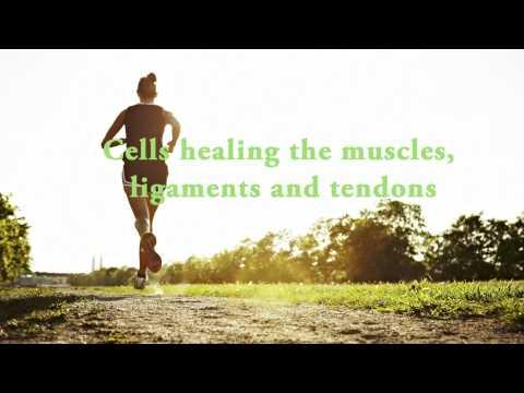 Labstraction le bodybuilding
