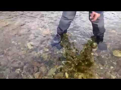 Pescando in un gioco sullandroide per scaricare