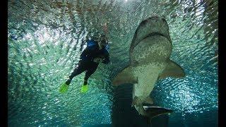 The National Aquarium of NZ, New Zealand