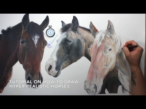 drawing realistic horses by sheldene fine art