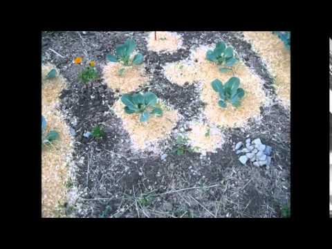 Organic Gardening And Using My Homemade Mulch