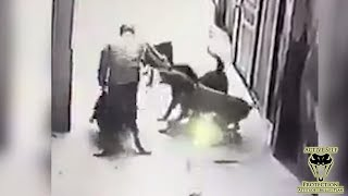 Dog Attack Shows Important Keys to Surviving   Active Self Protection