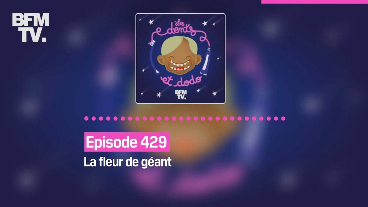 Les dents et dodo - Episode 429: la fleur de géant