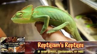 "DISC 122 - ""Reptiliam's"", Tonawanda, NY"