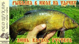 Рыбалка в июле на карася линя