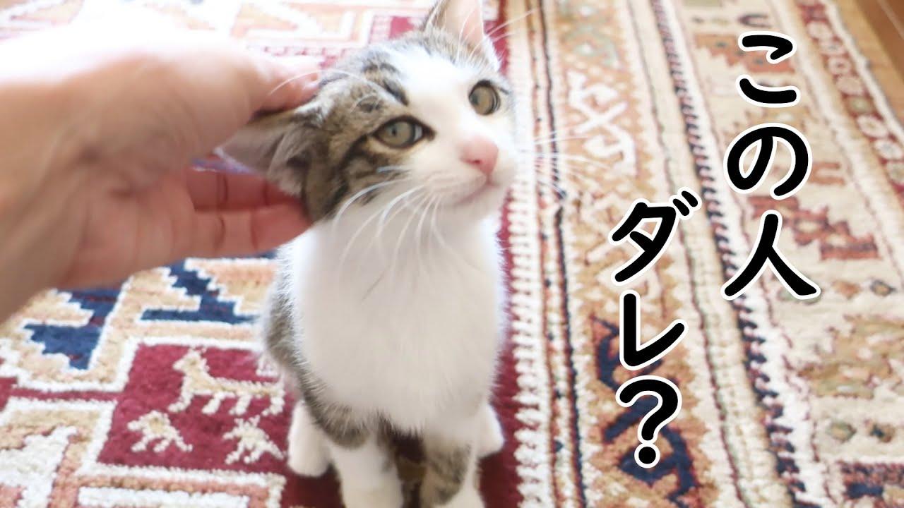 子猫のトワ、父じゃないけど撫でてくれるのはまんざらでもない