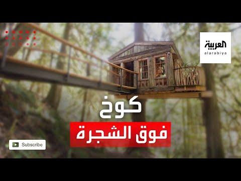 العرب اليوم - شاهد: شابان يحققان حلمهما ببناء كوخ خشبي أعلى شجرتهم القديمة