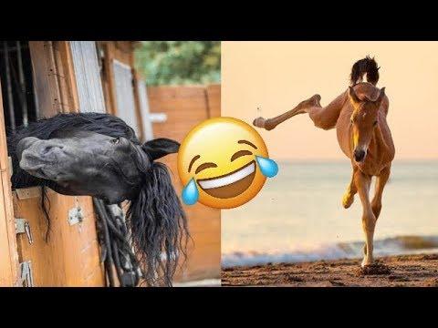 Video di merda sesso sporco