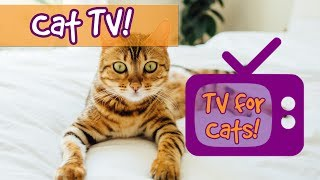 CAT TV! Soothing Interactive Nature Footage for Cats with Relaxing Music to Calm Stressed Cats! 🐈💤