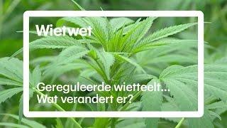 Nieuwe wietwet: dit gaat er veranderen - RTL NIEUWS