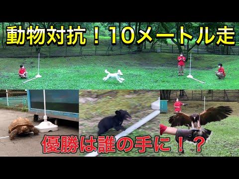 【第1回カドリンピック】動物対抗!10メートル競走!