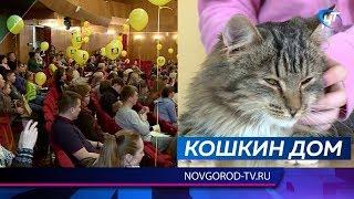 В центре «Диалог» состоялся ежегодный семейный праздник «Кошкин Дом»