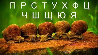 Животные на букву П,Р,С,Т,У,Х,Ф,Ц,Ч,Ш,Щ,Э,Ю,Я. Учим названия животных.